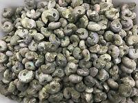 Wholesale Price! 2.2lb/50Pcs Ancient Ammonite Fossil Specimen Madagascar