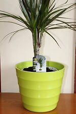 Quality Lime Green Rigid Plastic Plant Pot Cover - Diameter 23.5cms