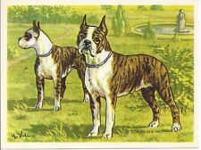 Rare 1952 Dog Art Print Austria Tobacco Bildwerk Company Card BOSTON TERRIER