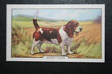 BASSET HOUND    Vintage Coloured Card  # VGC