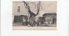 B78600 l arbre creux de yenidje vardar  macedonia  scan front/back image