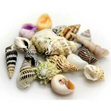 Hobby Sea Shells Set L 5 Snail Shells for Einsiedlerkrebse or Decor 0 99 €/ St