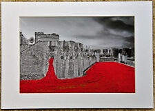 Poppies at The Tower of London England mounted photograph picture art print