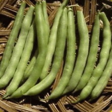 1 Lb Slenderette Green Bush Bean Seeds - Everwilde Farms Mylar Seed Packet