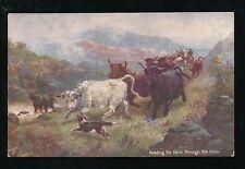 Artist HARRY PAYNE Scottish Highlands Heading the Herd Tuck Oilette #9441 PPC