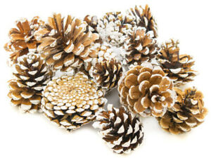 Assorted White Tipped Pine Cones 250gm Christmas decorations craft 250g xmas
