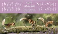 Nevis 2018 MNH Red Squirrel 3v M/S Squirrels Wild Animals Stamps