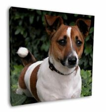 """Jack Russell Terrier Dog 12""""x12"""" Wall Art Canvas Decor, Picture Pri, AD-JR55-C12"""