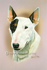 Bull Terrier Head Study Print by Robert J. May