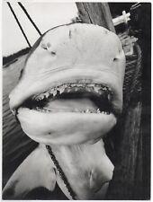 PHOTO ANCIENNE Requin Géant des mers Curiosité Bizarre Mort Pêche Dent Machoire