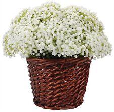 Duovlo Artificial Baby Breath Flower Gypsophila White For Wedding Home Decor of