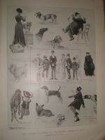 Dogs the Kennel Club show at the Crystal Palace by Ralph Cleaver 1902 print rf Z