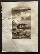 1799 - Buffon - Le monak - Gravure zoologie