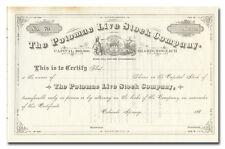 Potomac Live Stock Company Stock Certificate (Colorado Springs, Colorado)