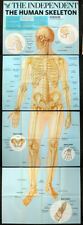 HUMAN ANATOMY SKELETON POSTERS X4 . INDEPENDENT NEWSPAPER WALLCHART . 4X A1 SIZE