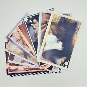 Retro Cats Blank Greeting Cards | Assorted Set of 10 Cards for All Occasions