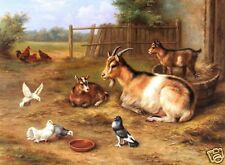 "Art Repro oil painting:""goats chickens doves at canvas"" 24"" x 36"" Inch"