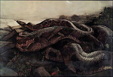 Vintage Maurice Edward Detmold Art Print Wildlife Nature Kaa Python Snake