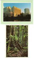 2 AK Ost-Malaysia: Kuching, Urwald von Sarawak