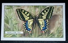 SWALLOWTAIL  Butterfly      Vintage Colour Card    VGC