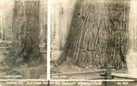 1940s Humboldt Redwood Highway California Flat Iron RPPC real photo 345