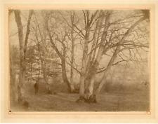 Diot. France, étude d'arbres Vintage albumen print Tirage albuminé  18x