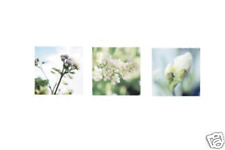 New Ikea TRILLING Flower Posters, set of 3