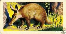 RED ROSE TEA CARD, SERIES: AFRICAN ANIMALS, AARDVARK