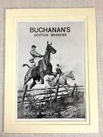 1915 Antico Stampa Buchanan's Whiskey Pubblicità Vecchia Fox Caccia Cavallo