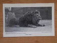 VINTAGE POSTCARD - RSPCA - GET AWAY - LION - 1930's ANIMAL WORLD SERIES
