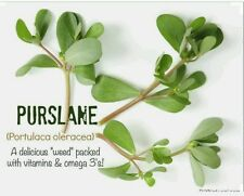 Purslane- 300 Seeds-Organic-Non GMO- Portulaca oleracea