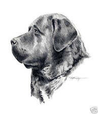 English Mastiff Dog Drawing Art 11 X 14 by Artist Djr