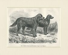 FLAT COATED RETRIEVER ANTIQUE 1878 NAMED DOGS DOG PRINT ENGRAVING READY MOUNTED