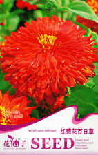 1 Pack 50 Youth-And-Old-Age Seeds Zinnia Elegans Red Chrysanthemum Zinnia A232