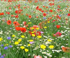 WILD FLOWER SEEDS MEADOW GRASS MIX GRASS 15g  ✅BUY 2 GET 2  FREE ✅