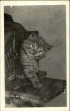 Kitten Kitty Cat in Old Camera - Winter Park FL Real Photo Postcard