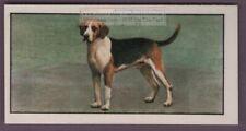 Foxhound Fox Hunting Dog Pet Canine Animal Vintage Ad Trade Card