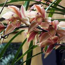 Rare 200Pcs Gartendeko Spots Cymbidium Cicada Orchideen-Blumen-Pflanzen-Samen