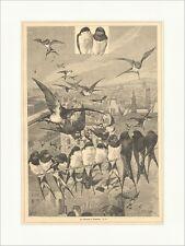 Der Aufbruch der Schwalben Tiere Vögel Schwarm Fliegen Flügel Holzstich E 15544