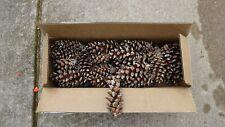 """75 Real Pine Cones 4""""-5"""" Pinecones Craft Supplies"""