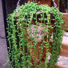 L Artificial Hanging Plants Fake Succulents-GreenDec String of Pearl Basketplant
