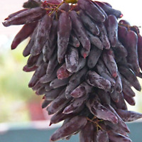 50 PCS Seeds Rare Fruit Growth Finger Grape Plants Garden Free Shipping 2019 New