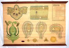 VINTAGE ROLL SCHOOL - LEAF AND FLOWER - ANTIQUE POSTER 102x71Cm Cartel Botany
