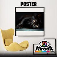 Affiches Chat Noir Cat Noir Yeux Chaton Papier Photo 35x35 50x50 70x70