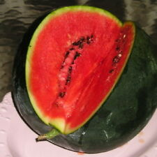 125 Sugar Baby WATERMELON Citrullus lanatus Seeds - Free Gift - COMB S/H