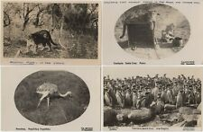 Argentina South America 4 RP Animal Postcards Lion Tiger Penguin Ostrich 1929