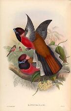 """John Gould """"BIRDS OF ASIA-RESTAURATO AD ALTA RES. più grande stampa-Making immagini DVD"""