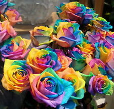 FD4538 Rainbow Rose Flower Clay Seeds Plants Yard Garden Perennial Plants 50PCs♫