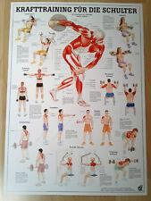 NEU Anatomie / Physiotherapie Lehrposter Krafttraining für die Schulter