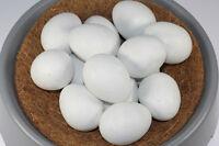 Nesteier  für Hühner ,Geflügel,KükenVolkunststoff mittel für Hüner 15 St art.36